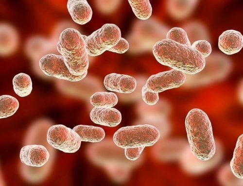 Ruminant Beslemede Probiyotik Kullanımı